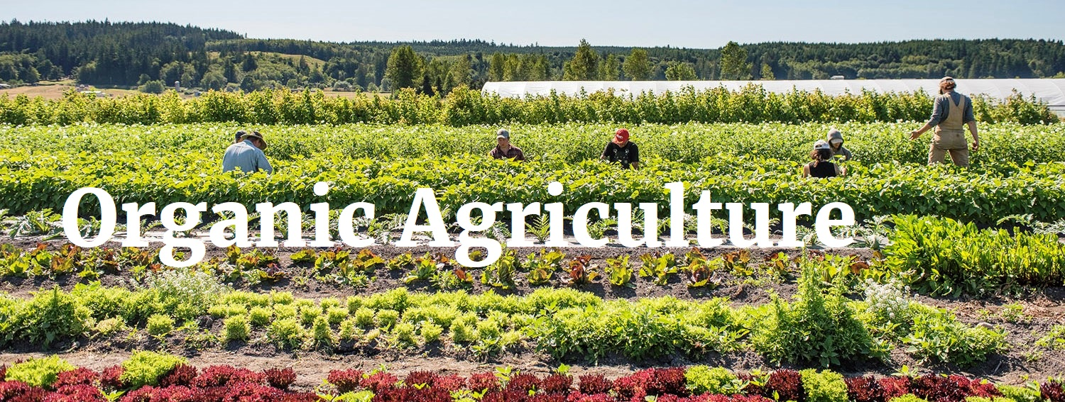 PM 41322 Organic Agriculture - 2021